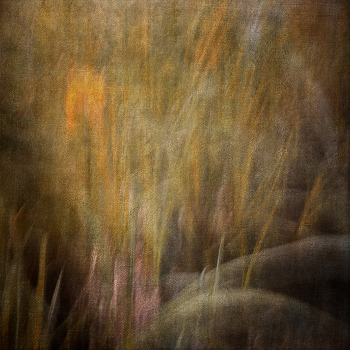 Impressionist flower photography by a pond. Volume 2 in this series