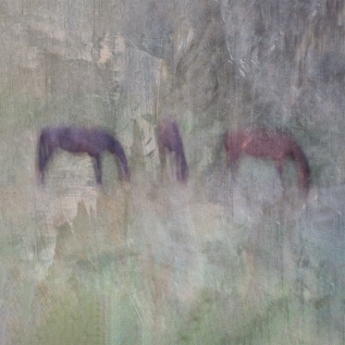 Impressionist rural scene of horses in a meadow. Volume 1 in this series