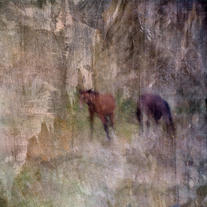 Impressionist rural scene of a horse in a summer meadow. Volume 7 in this series