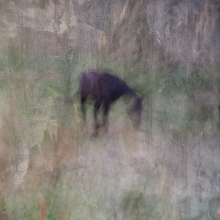 Impressionist rural scene of a horse in a meadow. Volume 3 in this series