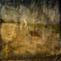 Impressionist abstract rural scene of a horse and rider in a field. Volume 8 in this series