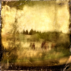 Impressionist abstract rural scene of horses in a meadow. Volume 18 in this series