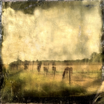 Impressionist abstract rural scene of horses in a meadow. Volume 15 in this series