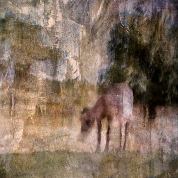 Impressionist abstract rural scene of cattle in a summer meadow. Volume 19 in this series