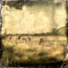 Impressionist abstract rural scene of horses in a meadow. Volume 16 in this series