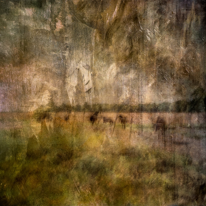 Impressionist abstract rural scene of horses in a meadow. Volume 13 in this series