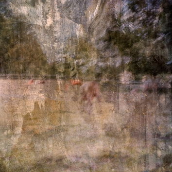 Impressionist abstract rural scene of cattle in a summer meadow. Volume 20 in this series