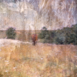 Impressionist abstract rural scene of a horse in a summer meadow. Volume 21 in this series