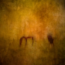 Impressionist abstract rural scene of horses in a summer meadow. Volume 23 in this series