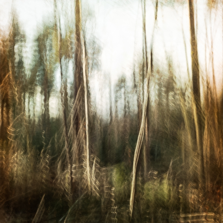 Impressionist forest scene. Volume 3 in this series